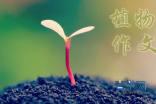 观察日记植物300字_三年级植物观察日记作文8篇